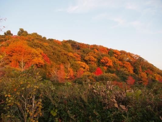 淡路島公園 紅葉
