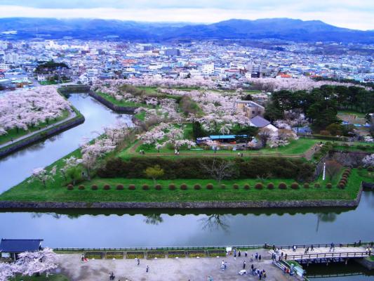五稜郭 桜