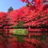 軽井沢の紅葉とアウトレットを楽しむ 秋の軽井沢日帰り満喫ツアー