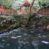 【島根】神秘的な泉に紙を浮かべて…女子旅にオススメ!八重垣神社で恋占い!